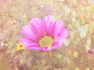 pink flower 11