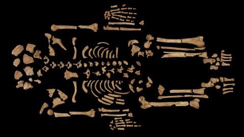 癌症的史前史——三千年前的癌症病人