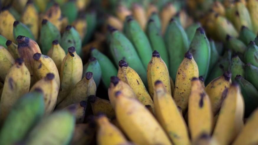 催熟香蕉不好吃