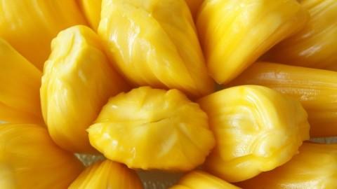 菠萝蜜抗癌